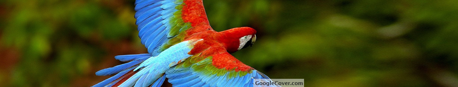Beautiful Parrot Google Cover