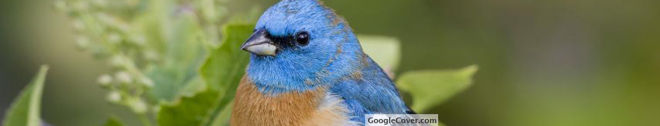 Blue Sparrow Google Cover