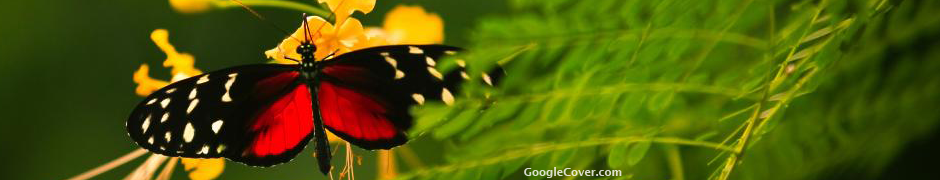 Butterfly Google Cover