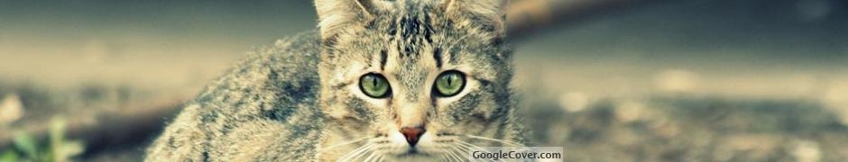 Cat Google Cover