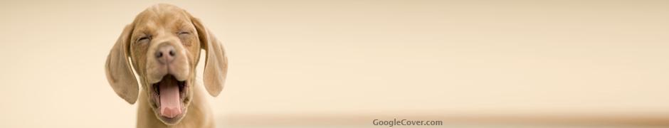 Happy Dog Google Cover