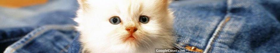 Kitten in Jeans Google Cover