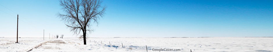 Lonely Tree in Snow Google Cover