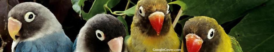 Parrots Google Cover