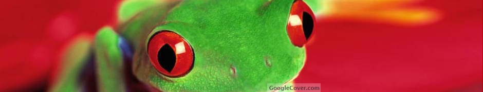 Red eyed tree frog Google Cover