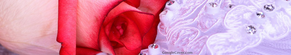 Rose Google Cover