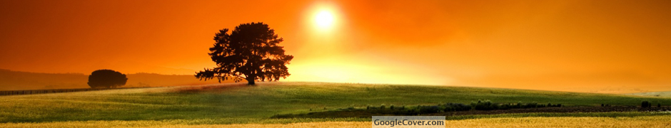 Sunny Day Google Cover