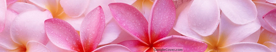 Tropical Plumeria Google Cover