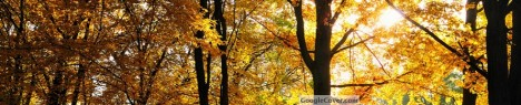 Autumn Season Google Cover