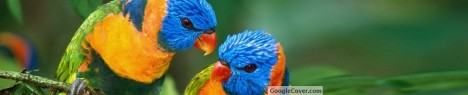 Beautiful Parrots Google Cover