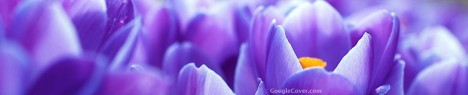 Blue Flower Google Cover