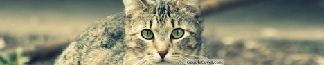 Cat Google Cover