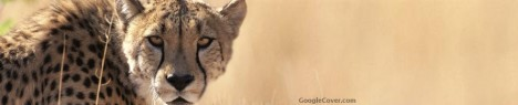 Cheetah Google Cover
