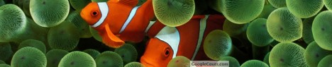 Clown Fish Google Cover