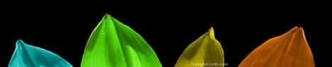 Color Petals Google Cover