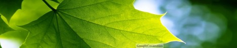 Green Leaf Google Cover