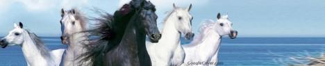 Horses Google Cover