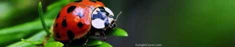 Ladybug Google Cover