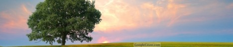 Lonely Tree Google Cover