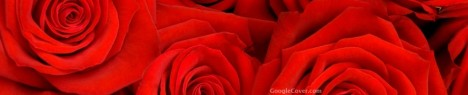 Lovely Roses Google Cover