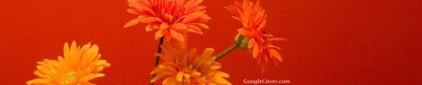 Orange Flowers Google Cover