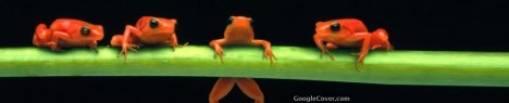 Orange Frogs Google Cover