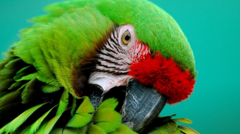 Parrot Google Cover