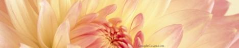 Pink Dahlia Google Cover