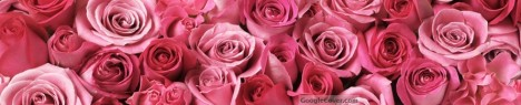 Pink Roses Google Cover