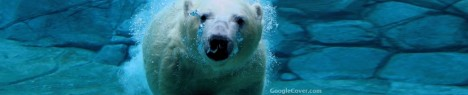 Polar Bear Swiming Google Cover