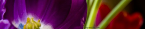 Purple flower Google Cover