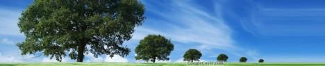 Queue of Trees Google Cover