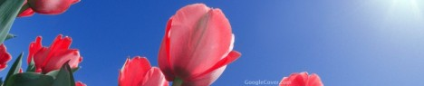 Red Tulip Google Cover