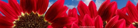 Red flower Google Cover