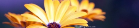 Rudbeckia flower Google Cover