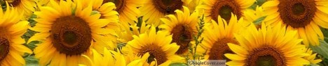 Sunflowers Google Cover