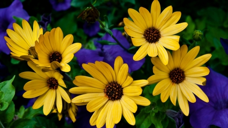 Yellow Flowers Google Cover